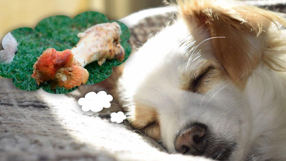 perros sueñan